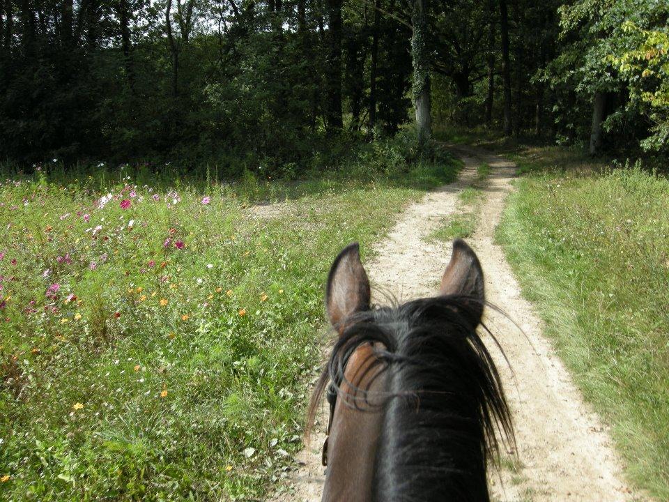 balade a cheval paris